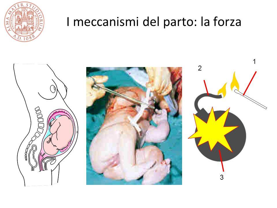 I meccanismi del parto: la forza 1 2 3