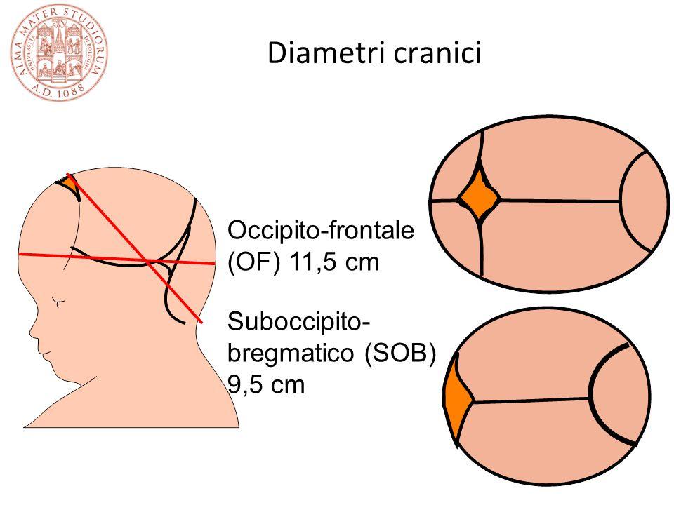 Diametri cranici Suboccipito- bregmatico (SOB) 9,5 cm Occipito-frontale (OF) 11,5 cm