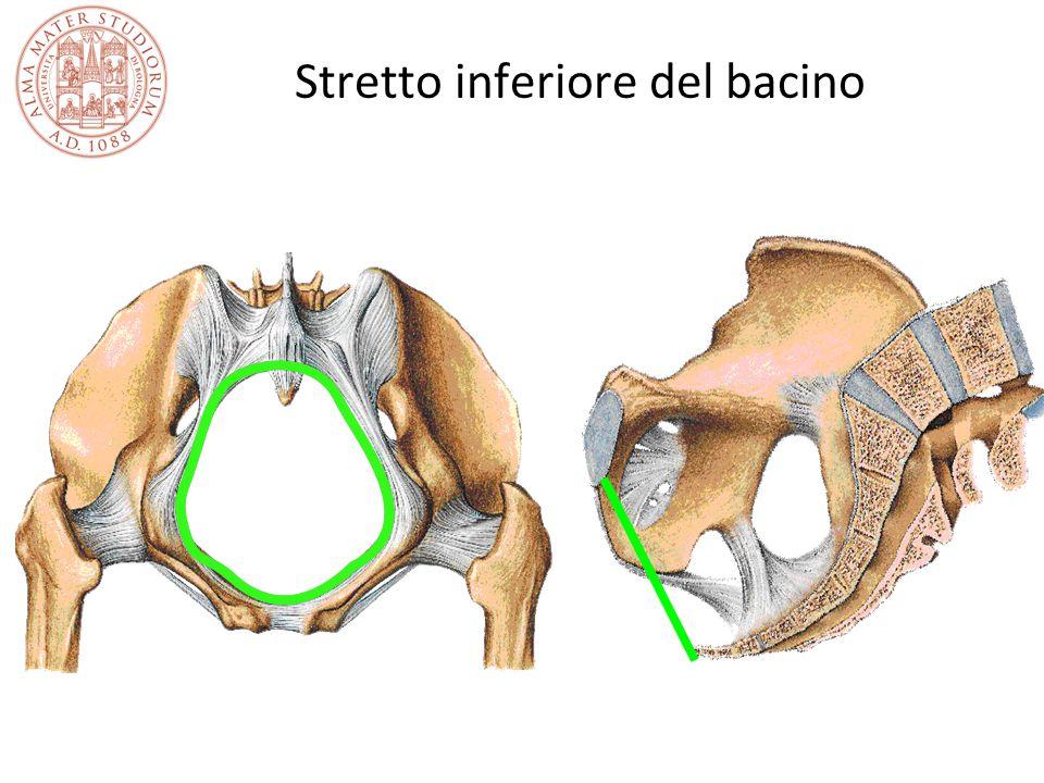 Stretto inferiore del bacino