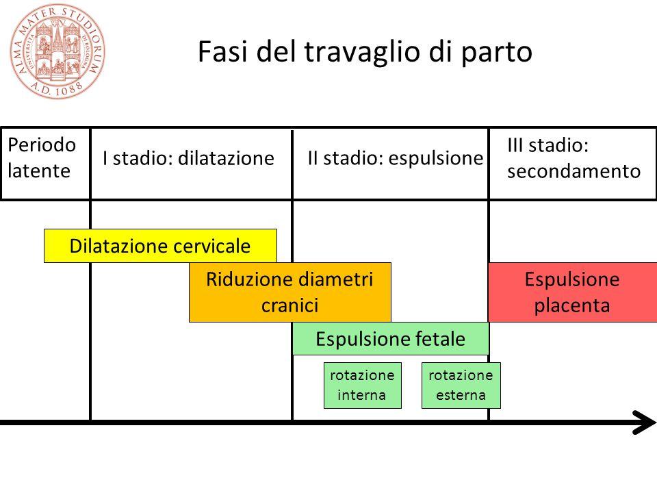 Fasi del travaglio di parto Periodo latente I stadio: dilatazione II stadio: espulsione III stadio: secondamento Espulsione fetale Dilatazione cervica