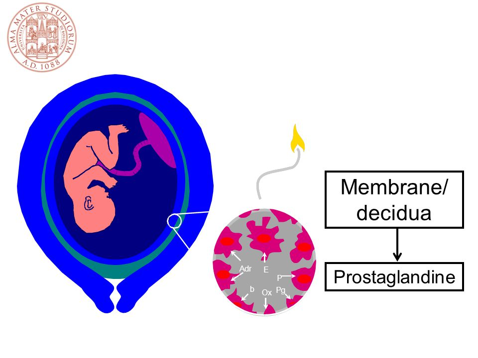 Controllo benessere fetale in travaglio Ascoltazione intermittente (ogni 15' stadio 1, 5' stadio 2) Cardiotocografia