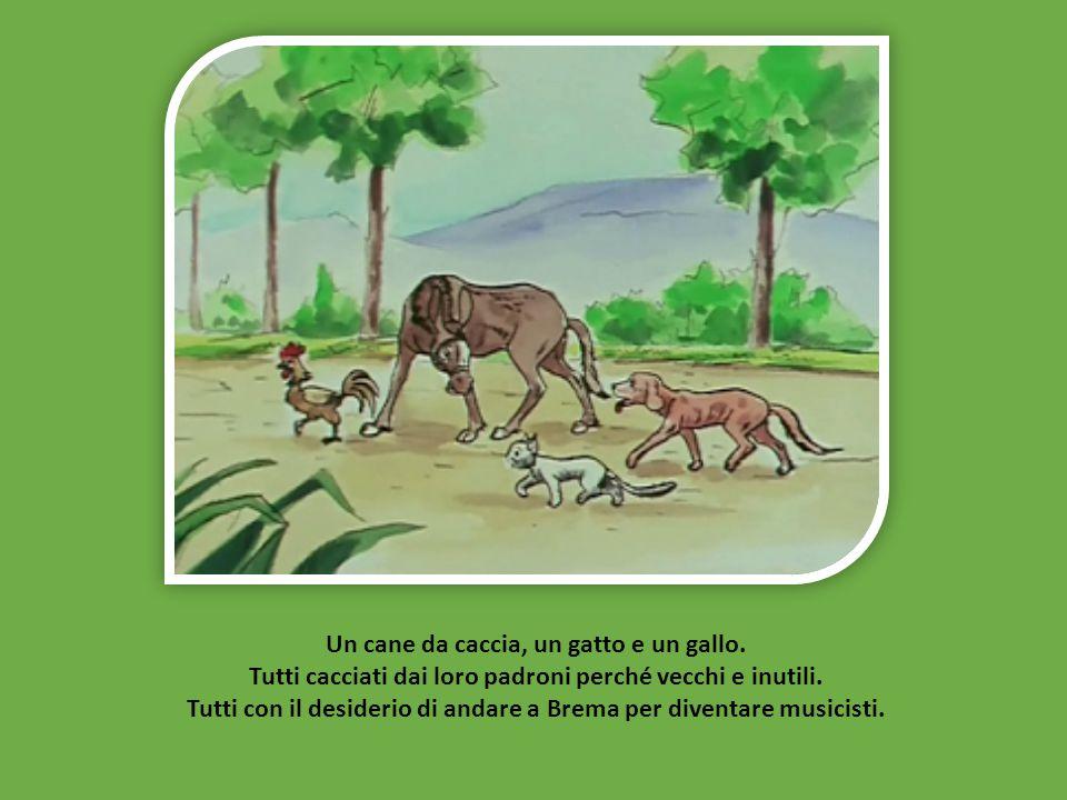 Un cane da caccia, un gatto e un gallo.Tutti cacciati dai loro padroni perché vecchi e inutili.