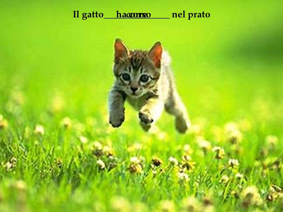 Il gatto______________ nel pratocorreha corso