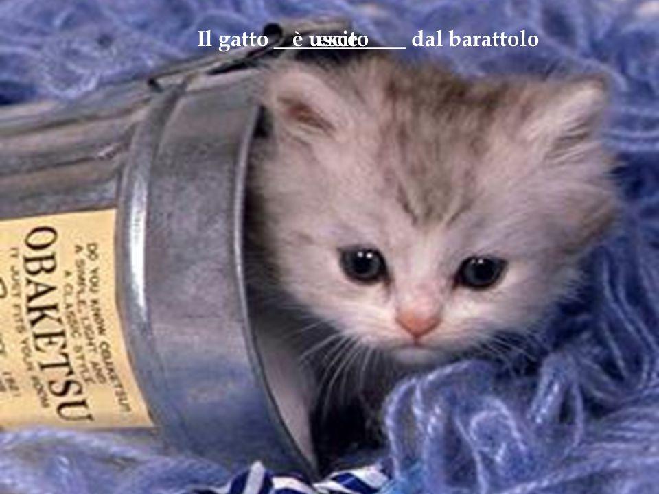 Il gatto ____________ dal barattoloesceè uscito