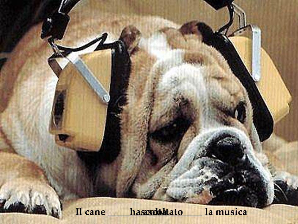 Il cane ___________________ la musicaascoltaha ascoltato