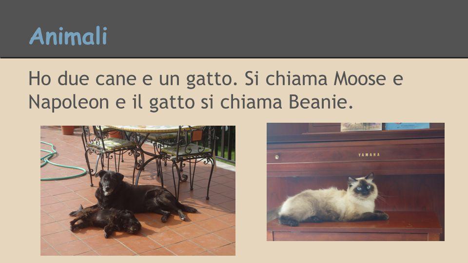 Animali Ho due cane e un gatto. Si chiama Moose e Napoleon e il gatto si chiama Beanie.