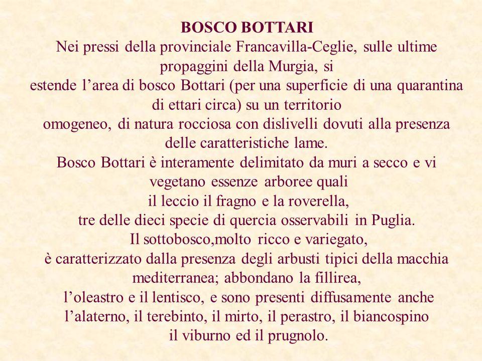 BOSCO BOTTARI Nei pressi della provinciale Francavilla-Ceglie, sulle ultime propaggini della Murgia, si estende l'area di bosco Bottari (per una super