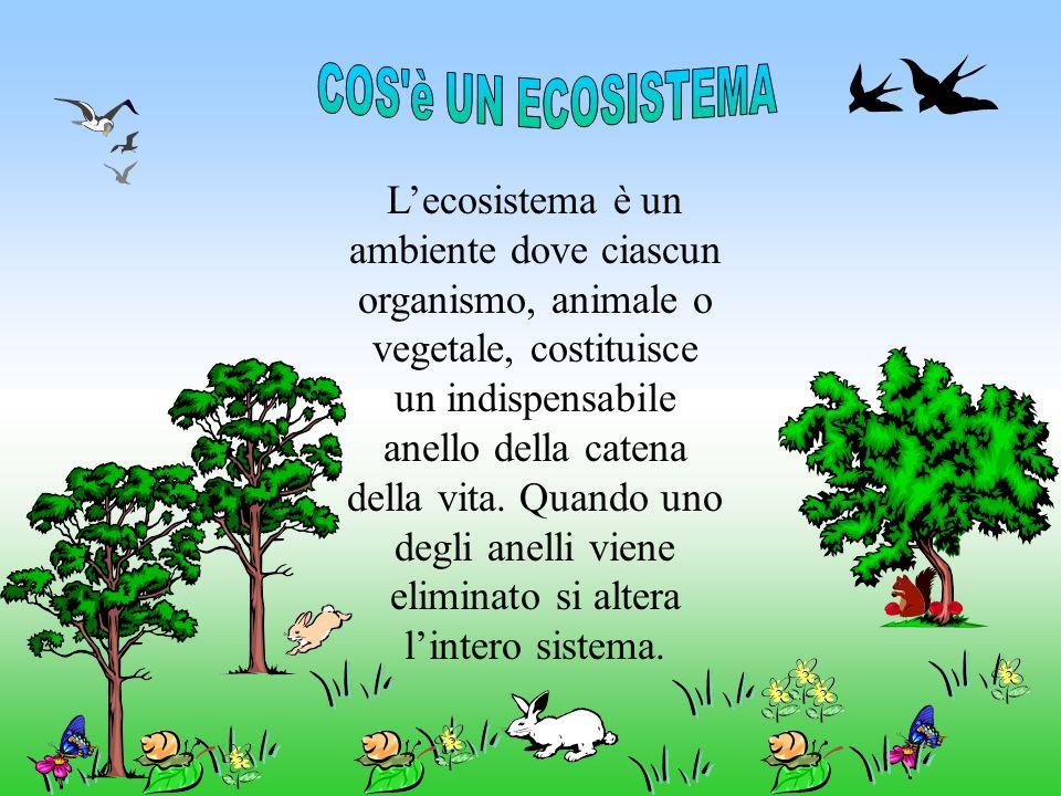 L'ecosistema è un ambiente dove ciascun organismo, animale o vegetale, costituisce un indispensabile anello della catena della vita. Quando uno degli