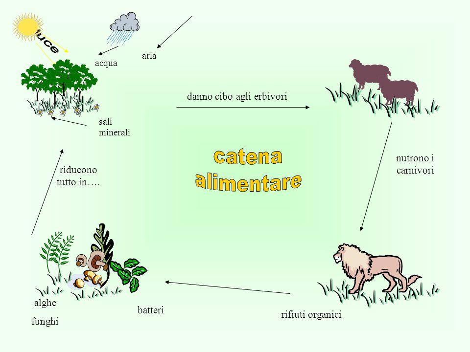 acqua aria sali minerali danno cibo agli erbivori nutrono i carnivori riducono tutto in…. alghe funghi batteri rifiuti organici