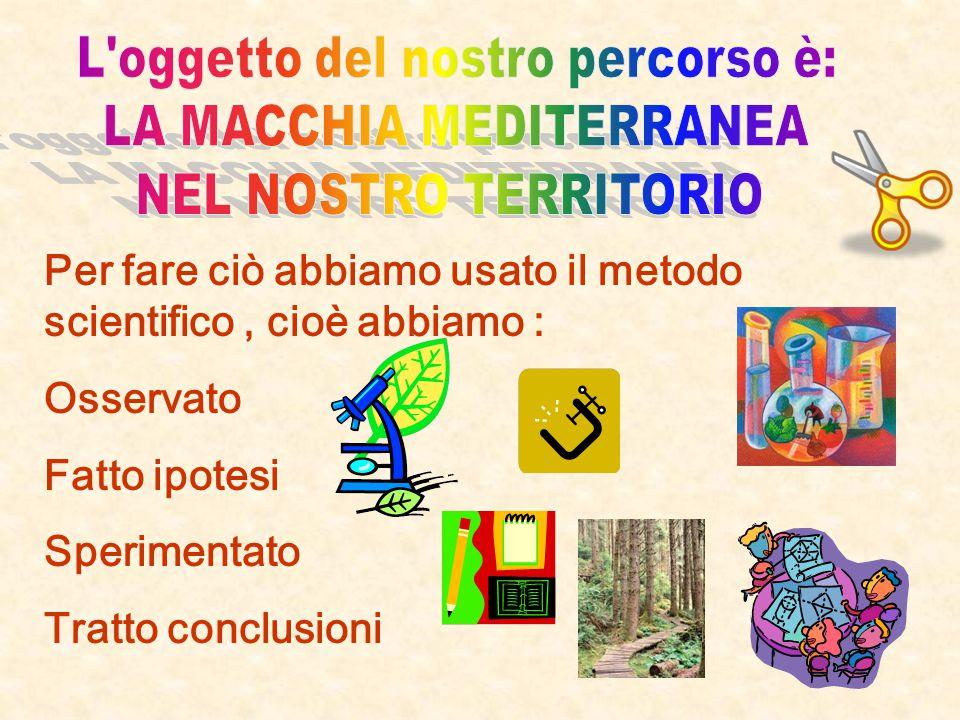 Nome: Ceglie Messapica C.A. P. 72013 Provincia: Brindisi Regione: Puglia Posizione: collina 306 m.