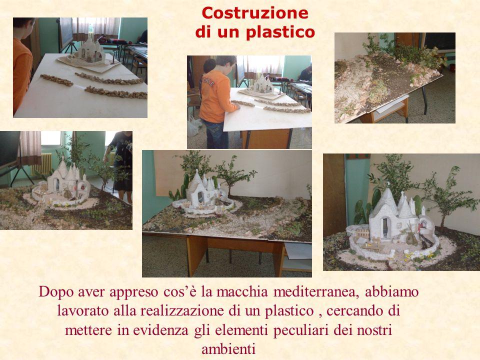 Costruzione di un plastico Dopo aver appreso cos'è la macchia mediterranea, abbiamo lavorato alla realizzazione di un plastico, cercando di mettere in
