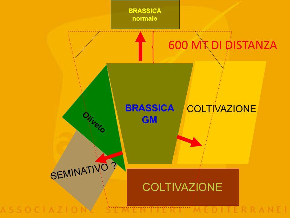 Colture Seme base Seme certificato Mais 200 m. 200 m. Colza 200 m. 100 m. Barbabietola 1.000 m. 300-600 m. Cicoria ind. 600 m. 300 m. Brassica 1.000 m