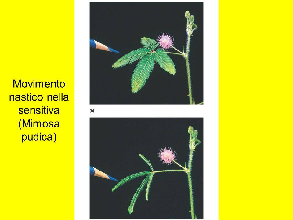 Comunicazione nelle piante Le piante comunicano chimicamente Piante ferite emettono segnali chimici che: –Avvertono altre piante di prepararsi per l'attacco.