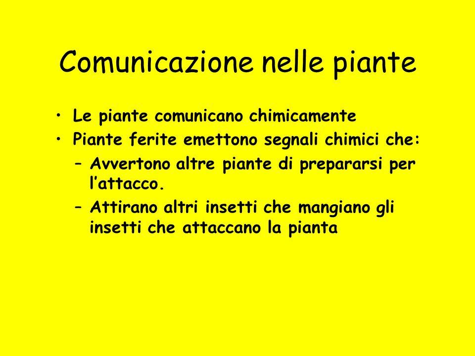 Comunicazione nelle piante Le piante comunicano chimicamente Piante ferite emettono segnali chimici che: –Avvertono altre piante di prepararsi per l'a