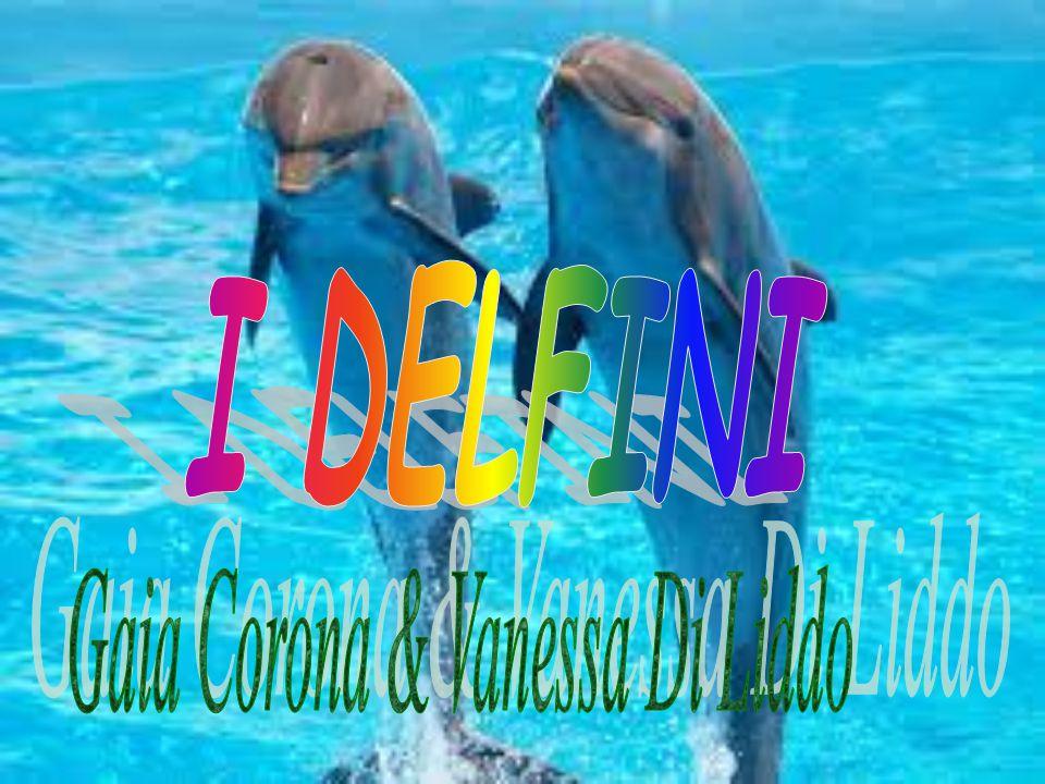 I delfini sono dei mammiferi appartenenti alla famiglia dei delfinidi e possono vivere fino a 35 anni.
