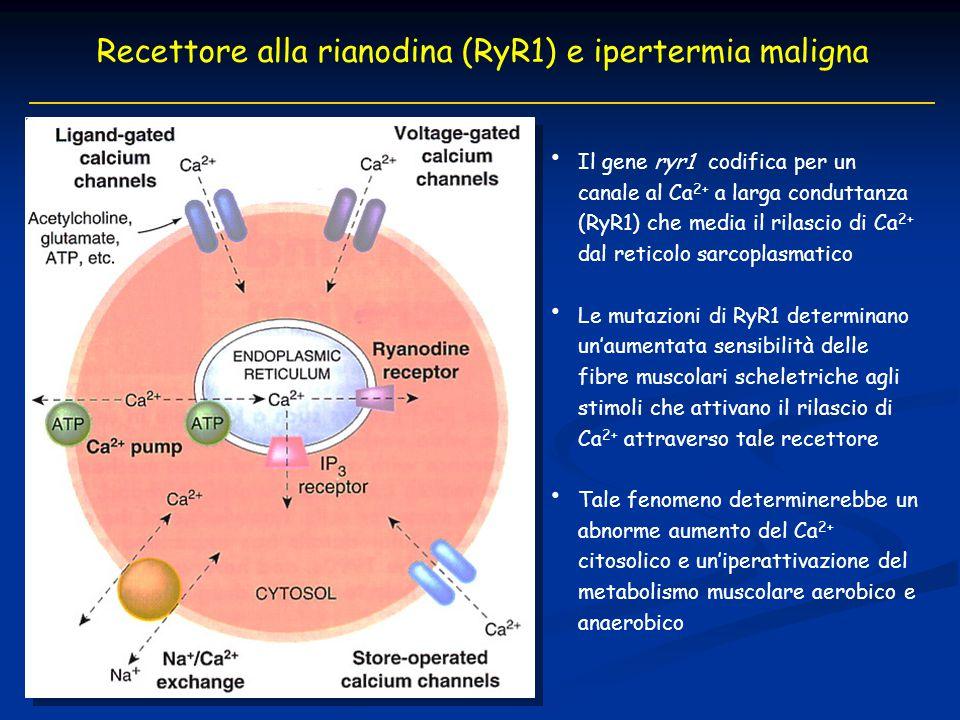 Recettore alla rianodina (RyR1) e ipertermia maligna Il gene ryr1 codifica per un canale al Ca 2+ a larga conduttanza (RyR1) che media il rilascio di