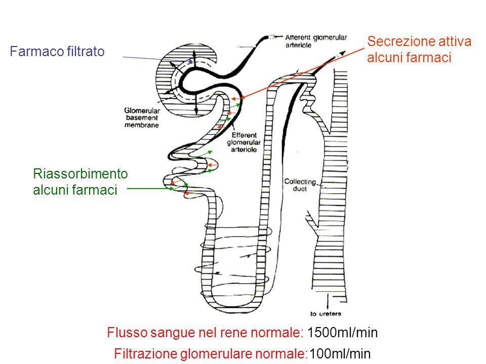 Farmaco filtrato Secrezione attiva alcuni farmaci Riassorbimento alcuni farmaci Flusso sangue nel rene normale: 1500ml/min Filtrazione glomerulare nor