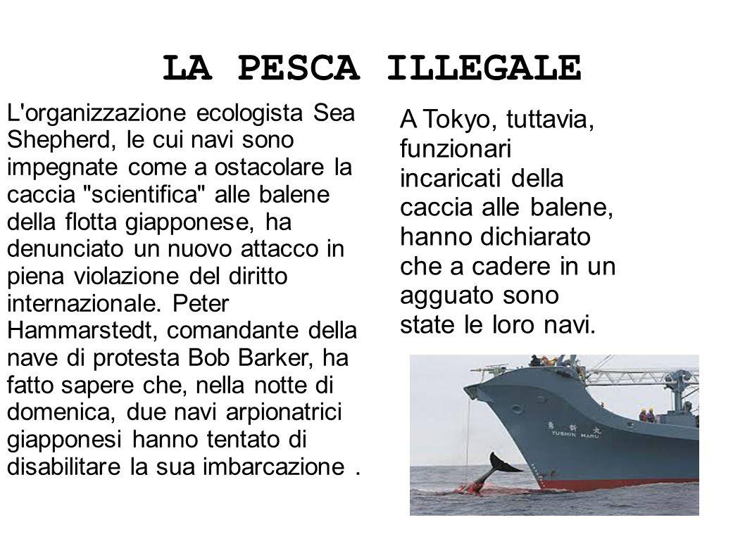 LA PESCA ILLEGALE L'organizzazione ecologista Sea Shepherd, le cui navi sono impegnate come a ostacolare la caccia