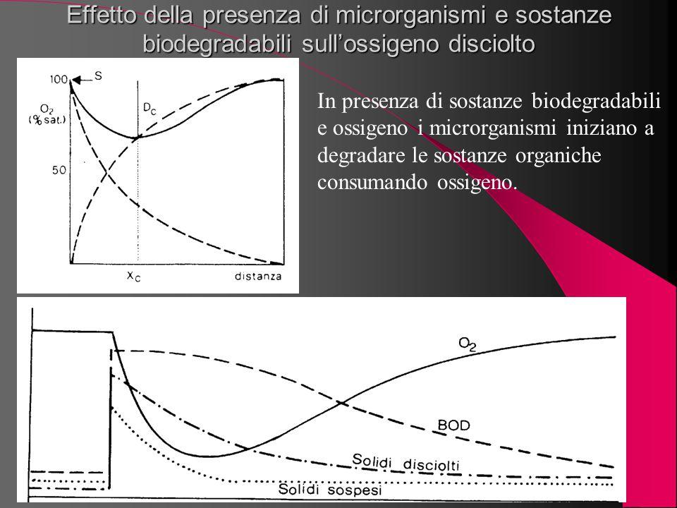 Effetto della presenza di microrganismi e sostanze biodegradabili sull'ossigeno disciolto In presenza di sostanze biodegradabili e ossigeno i microrga