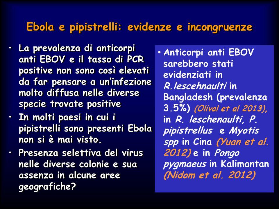 Ebola e pipistrelli: evidenze e incongruenze La prevalenza di anticorpi anti EBOV e il tasso di PCR positive non sono così elevati da far pensare a un'infezione molto diffusa nelle diverse specie trovate positive In molti paesi in cui i pipistrelli sono presenti Ebola non si è mai visto.