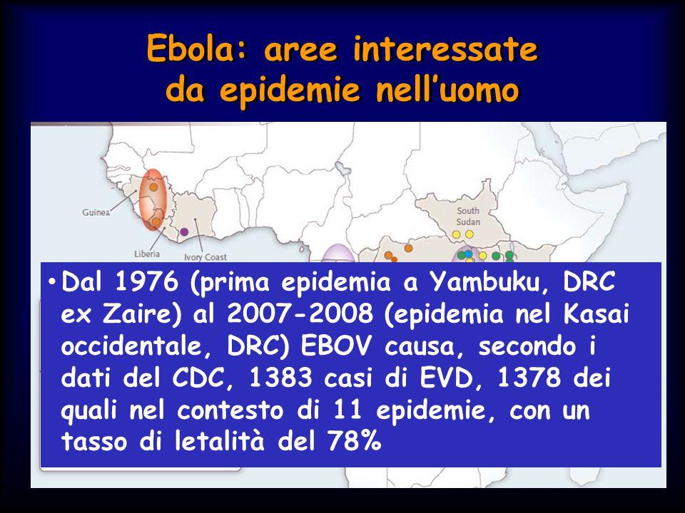 Ebolavirus Il genere Ebolavirus comprende 5 specie distinte: - Ebola* virus (EBOV) - Sudan virus (SUDV) - Reston virus (RESTV) - Taï Forest virus (TAFV) - Bundibugyo virus (BDBV) La differenza interspecie varia tra il 37% e il 41% a livello nucleotidico e dal 34% al 43% a livello aminoacidico * precedentemente denominato Ebola Zaire Il genere Ebolavirus comprende 5 specie distinte: - Ebola* virus (EBOV) - Sudan virus (SUDV) - Reston virus (RESTV) - Taï Forest virus (TAFV) - Bundibugyo virus (BDBV) La differenza interspecie varia tra il 37% e il 41% a livello nucleotidico e dal 34% al 43% a livello aminoacidico * precedentemente denominato Ebola Zaire