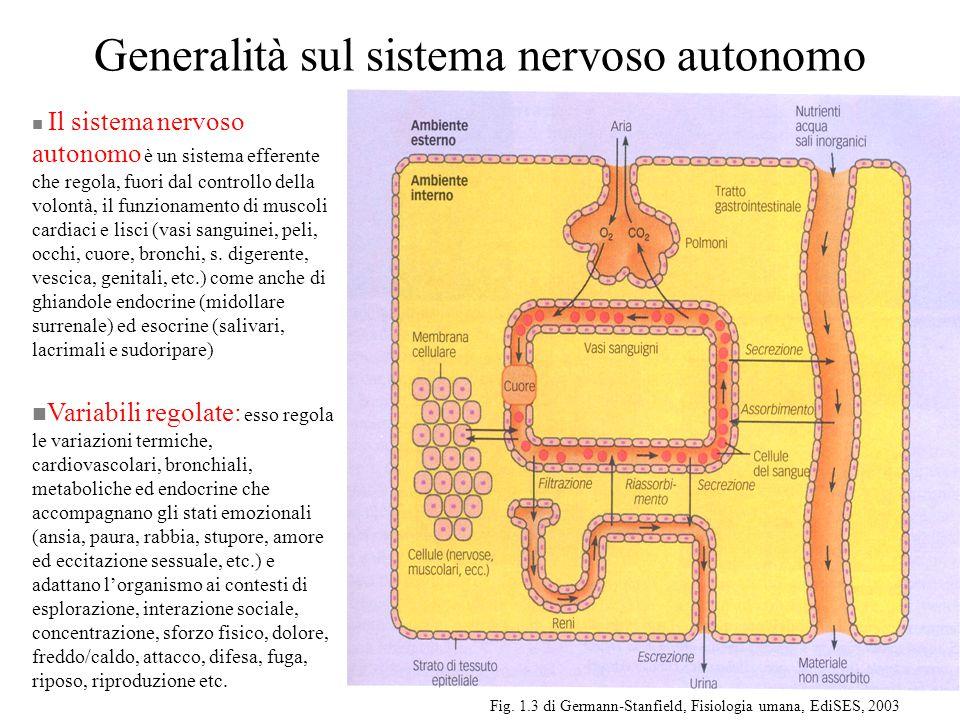 Sistema Neurovegetativo E' composto da fibre motrici efferenti viscerali Si divide in –Simpatico : i neuroni lanciano il SNC attraverso i nervi spinali della regione dorsale e lombare –Parasimpatico : i neuroni lasciano il SNC attraverso i nervi cranici e i nervi della regione sacrale del midollo