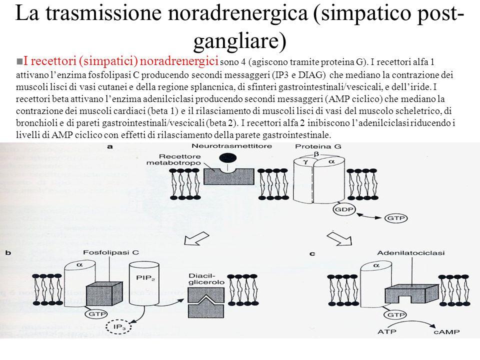 Riepilogo dei recettori del sistema nervoso autonomo Tabella 2-3 di Costanzo, Fisiologia, EdiSES, 1998