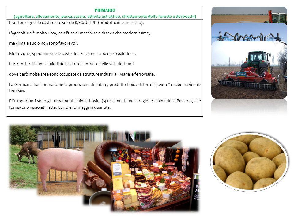 PRIMARIO (agrioltura, allevamento, pesca, caccia, attività estrattive, sfruttamento delle foreste e dei boschi) Il settore agricolo costituisce solo l