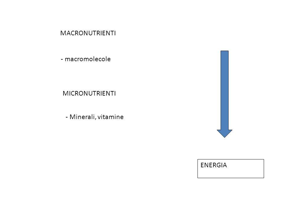 MACRONUTRIENTI MICRONUTRIENTI ENERGIA - macromolecole - Minerali, vitamine