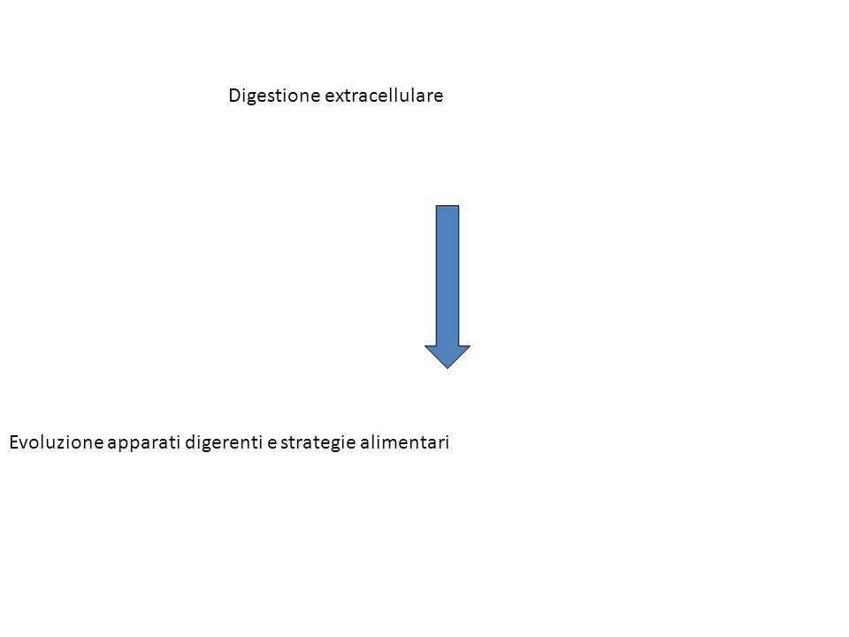 Digestione extracellulare Evoluzione apparati digerenti e strategie alimentari