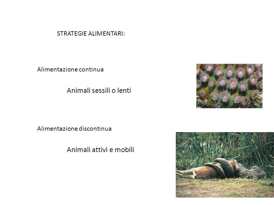 STRATEGIE ALIMENTARI: Alimentazione continua Alimentazione discontinua Animali sessili o lenti Animali attivi e mobili