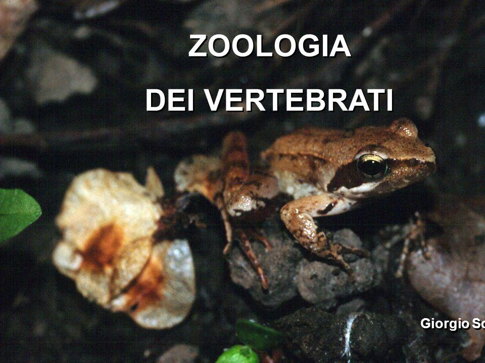 ZOOLOGIA DEI VERTEBRATI Giorgio Scarì ZOOLOGIA DEI VERTEBRATI Giorgio Scarì