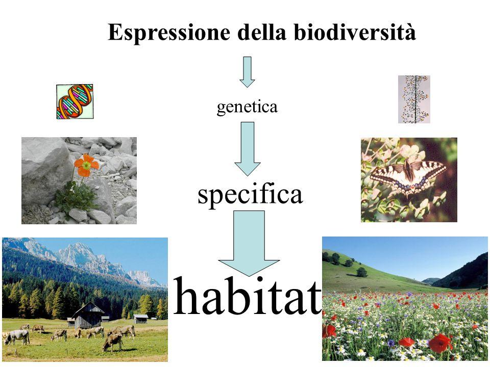 Espressione della biodiversità habitat specifica genetica