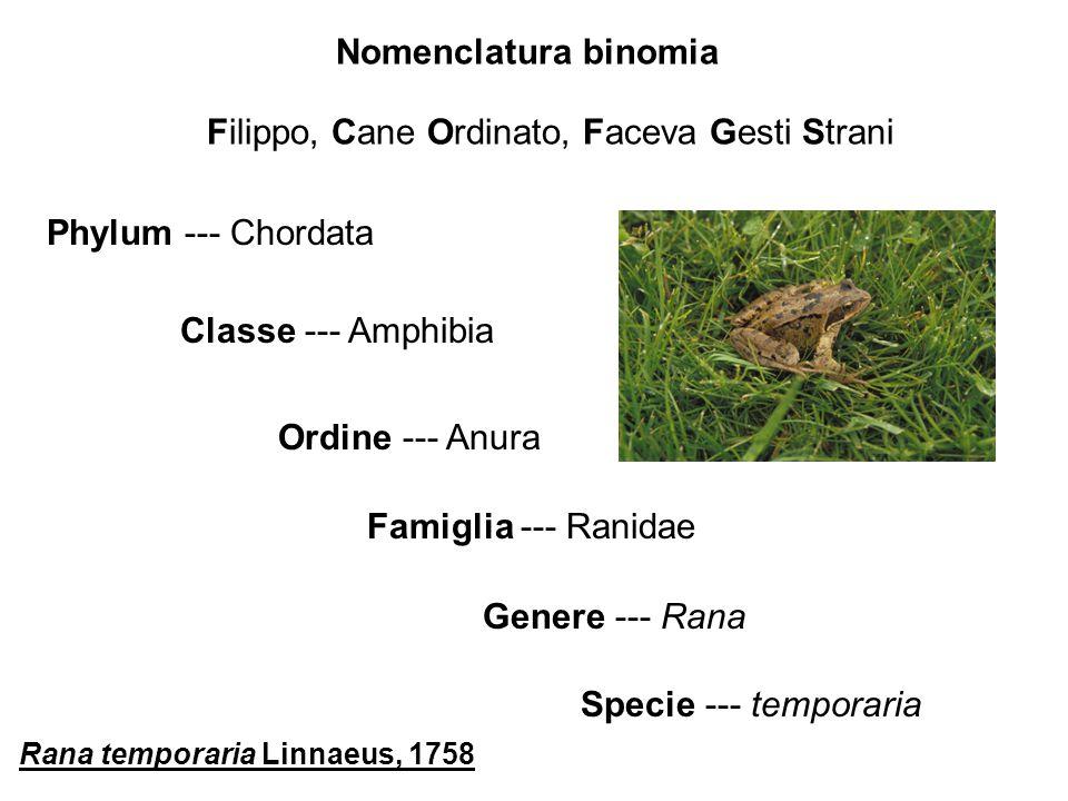 Nomenclatura binomia Phylum --- Chordata Classe --- Amphibia Famiglia --- Ranidae Ordine --- Anura Genere --- Rana Specie --- temporaria Filippo, Cane Ordinato, Faceva Gesti Strani Rana temporaria Linnaeus, 1758
