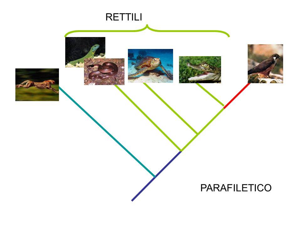 PARAFILETICO RETTILI