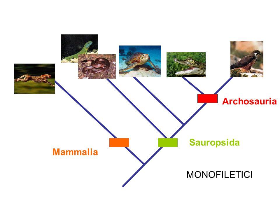 Archosauria MONOFILETICI Sauropsida Mammalia