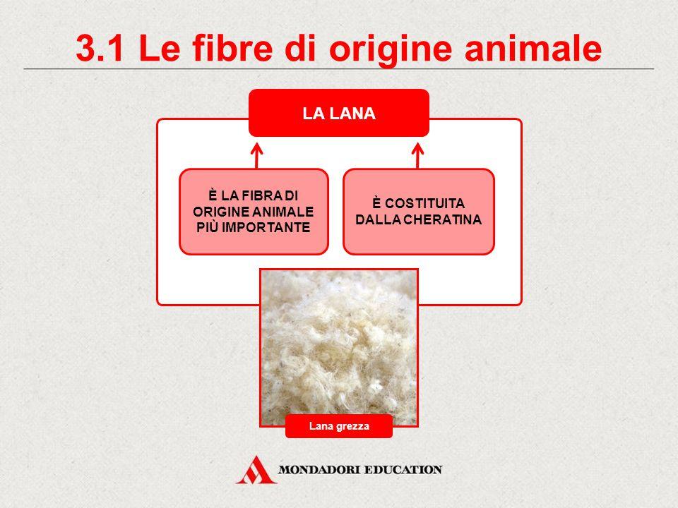 3. Le fibre di origine animale FIBRA ANIMALE PROPRIETÀ Lana Seta UTLIZZO igroscopica coibente brucia con difficoltà elastica igroscopica resistente al