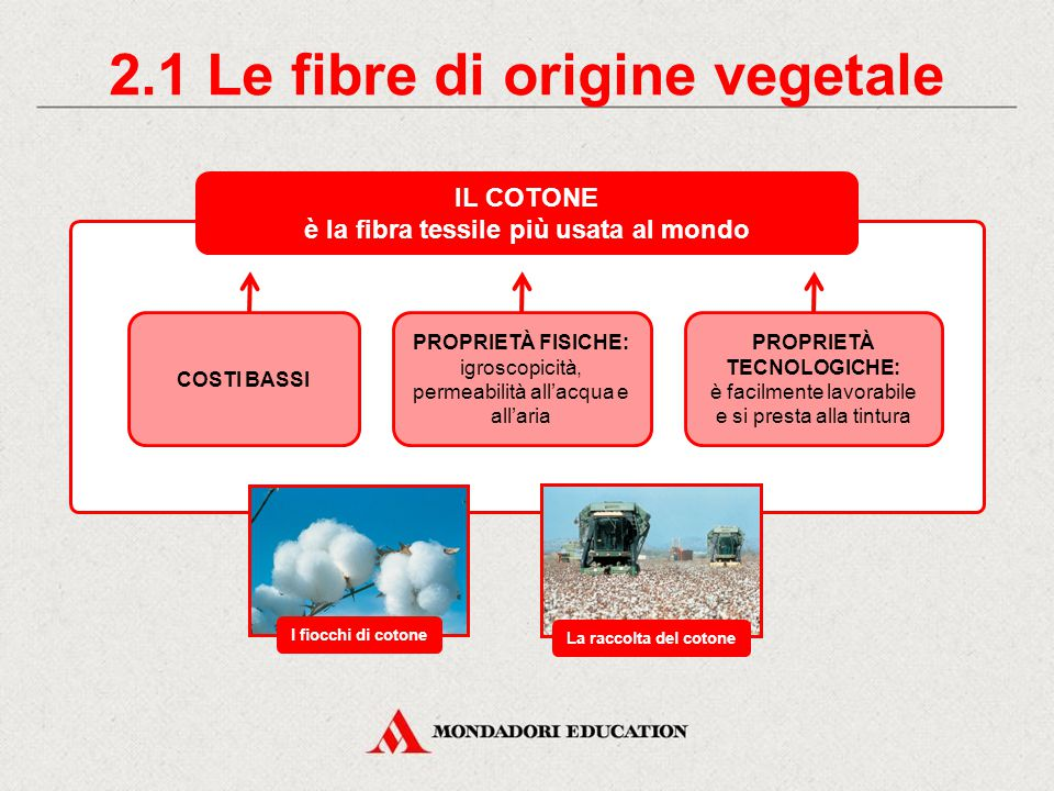 2.1 Le fibre di origine vegetale IL COTONE è la fibra tessile più usata al mondo COSTI BASSI PROPRIETÀ FISICHE: igroscopicità, permeabilità all'acqua e all'aria PROPRIETÀ TECNOLOGICHE: è facilmente lavorabile e si presta alla tintura I fiocchi di cotone La raccolta del cotone