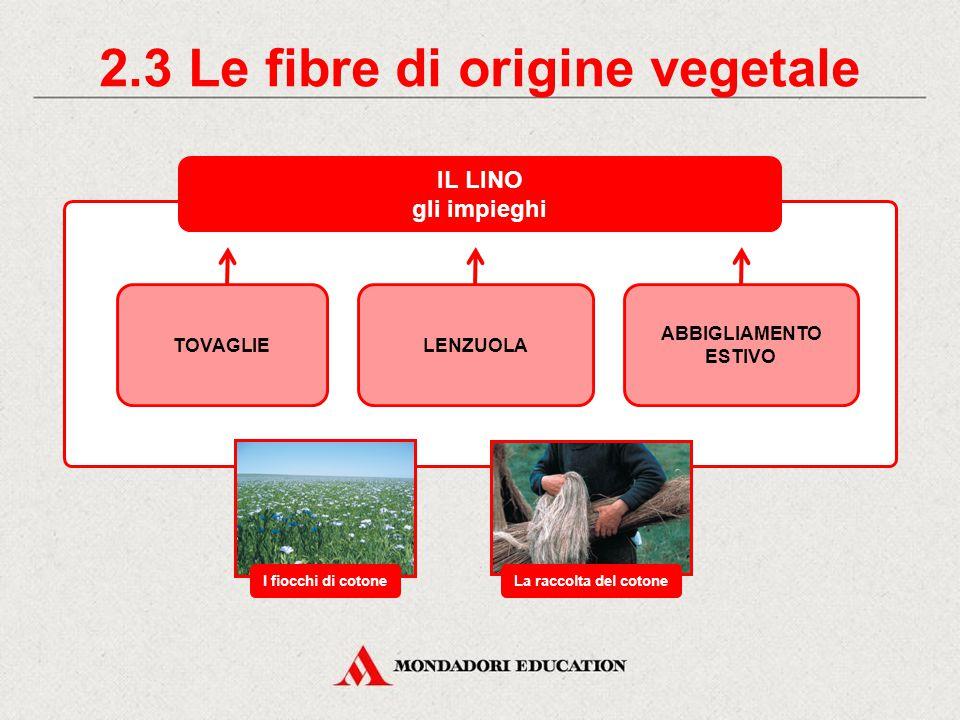 2.3 Le fibre di origine vegetale IL LINO gli impieghi TOVAGLIELENZUOLA ABBIGLIAMENTO ESTIVO I fiocchi di cotoneLa raccolta del cotone