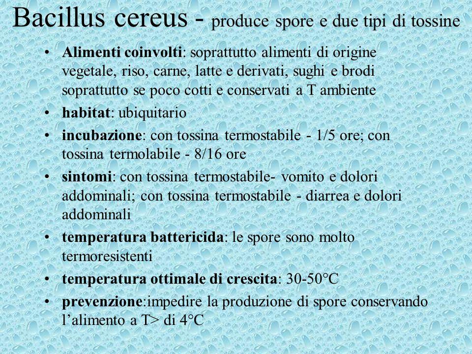Bacillus cereus - produce spore e due tipi di tossine Alimenti coinvolti: soprattutto alimenti di origine vegetale, riso, carne, latte e derivati, sug