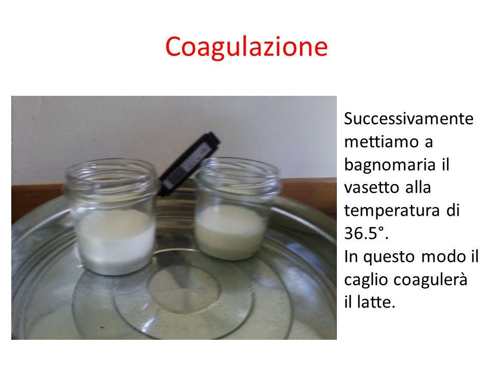 Coagulazione Successivamente mettiamo a bagnomaria il vasetto alla temperatura di 36.5°. In questo modo il caglio coagulerà il latte.