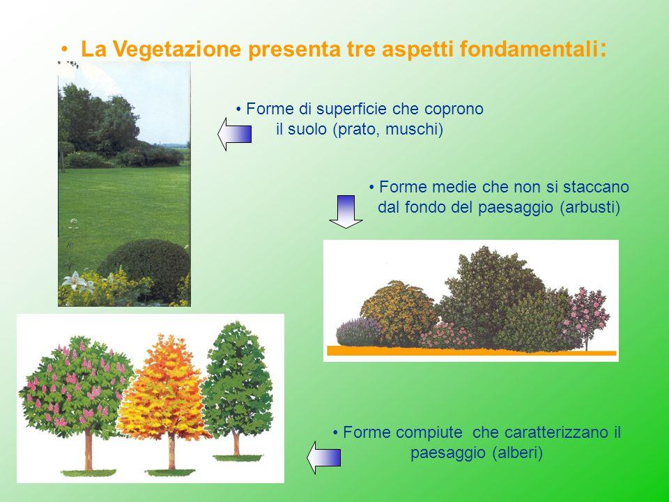 Forme compiute che caratterizzano il paesaggio (alberi) Forme medie che non si staccano dal fondo del paesaggio (arbusti) La Vegetazione presenta tre
