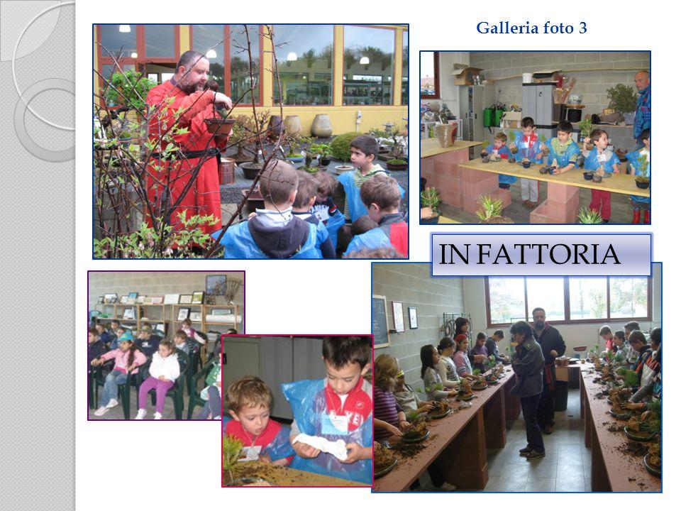 Galleria foto 3 IN FATTORIA