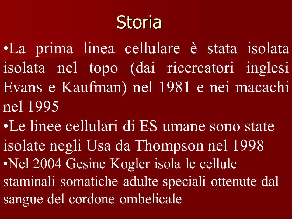 Storia La prima linea cellulare è stata isolata isolata nel topo (dai ricercatori inglesi Evans e Kaufman) nel 1981 e nei macachi nel 1995 Le linee ce