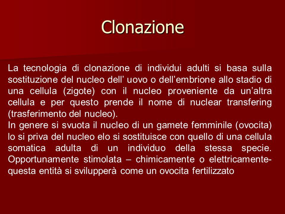 Clonazione La tecnologia di clonazione di individui adulti si basa sulla sostituzione del nucleo dell' uovo o dell'embrione allo stadio di una cellula