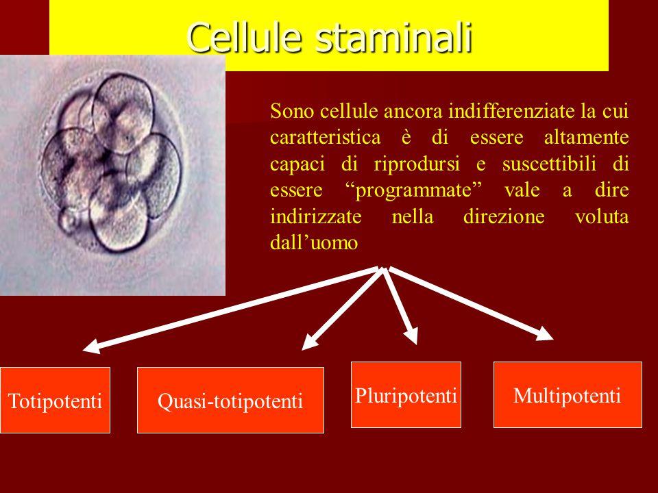 """Cellule staminali Sono cellule ancora indifferenziate la cui caratteristica è di essere altamente capaci di riprodursi e suscettibili di essere """"progr"""