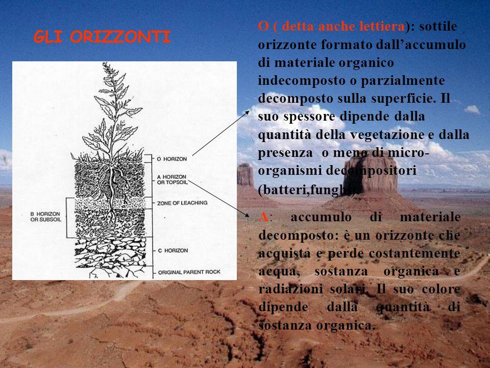 O ( detta anche lettiera): sottile orizzonte formato dall'accumulo di materiale organico indecomposto o parzialmente decomposto sulla superficie.