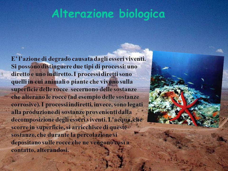 Alterazione biologica E' l'azione di degrado causata dagli esseri viventi.