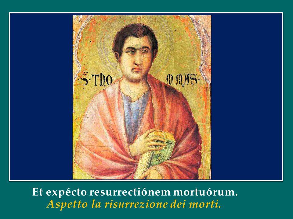 Confíteor unum baptísma in remissiónem peccatórum. Professo un solo battesimo per il perdono dei peccati.
