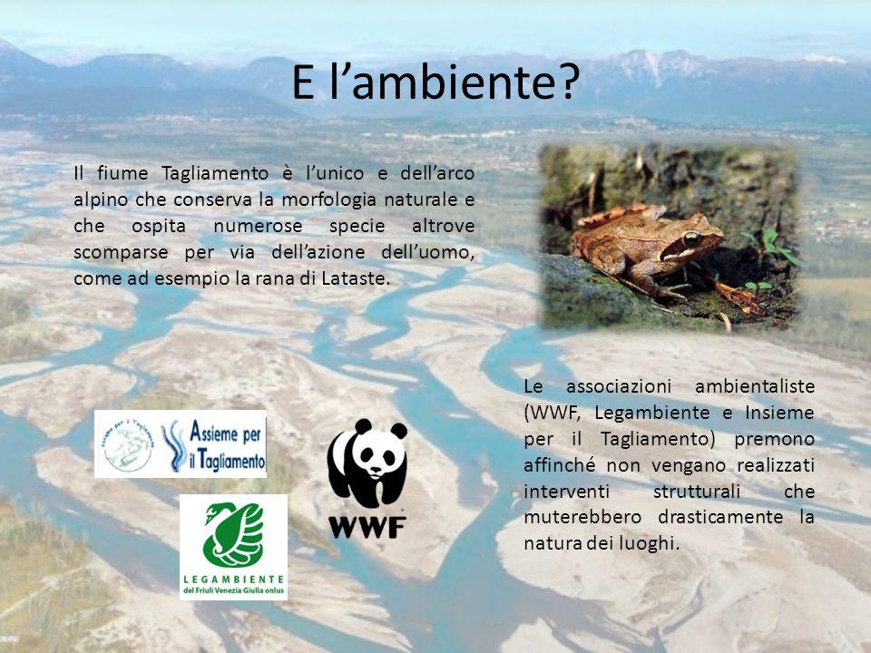 E l'ambiente? Il fiume Tagliamento è l'unico e dell'arco alpino che conserva la morfologia naturale e che ospita numerose specie altrove scomparse per